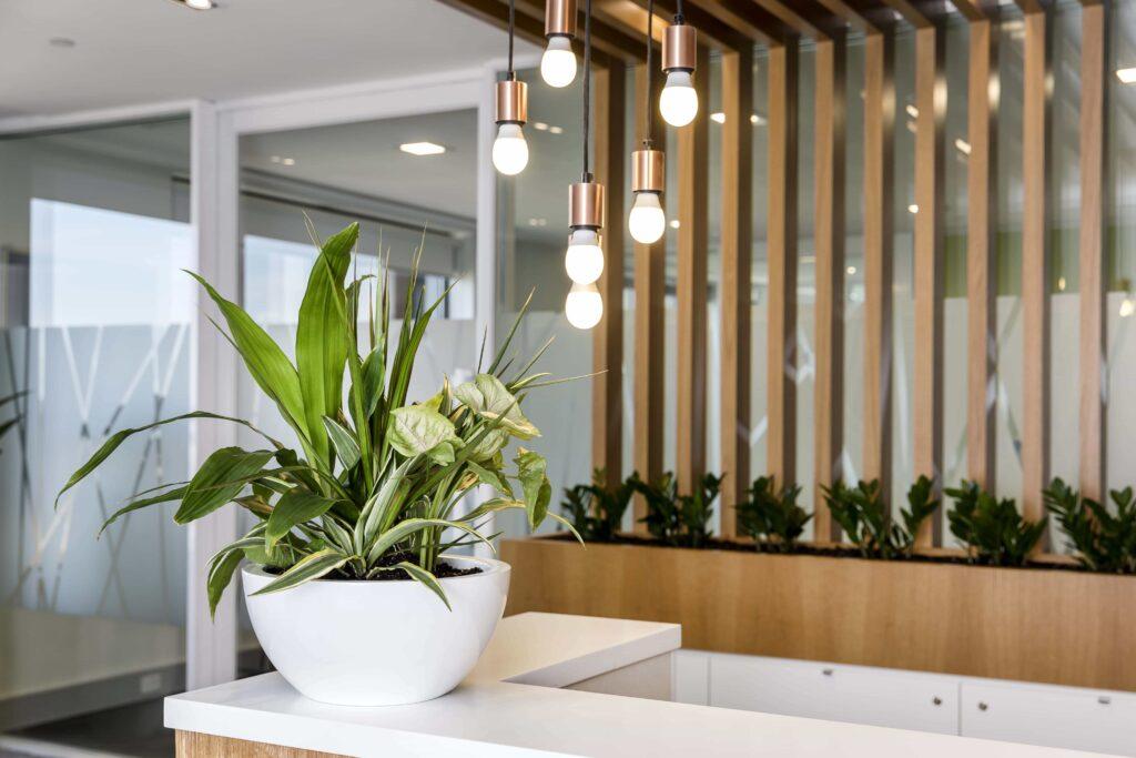 Desktop Plant