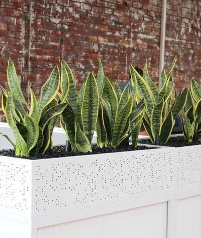 Planter Unit Plants
