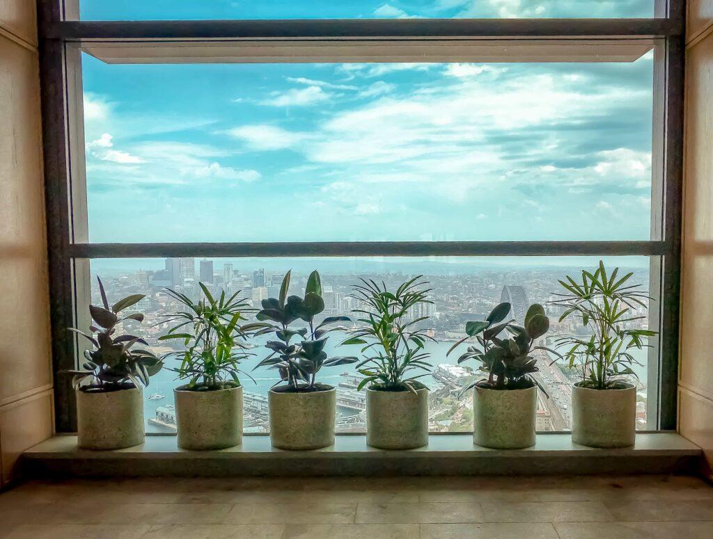 Office Plants by Window
