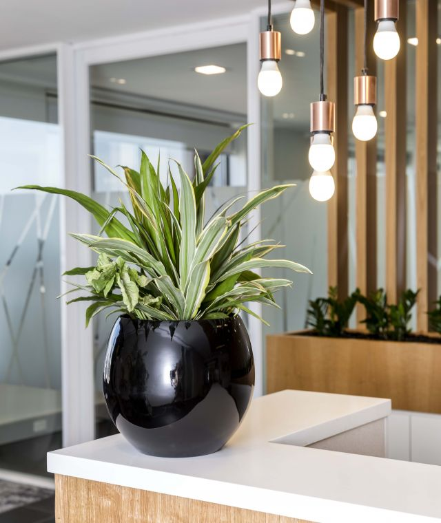 Desktop Planters
