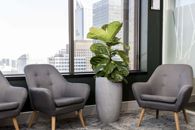 Benefits of indoor plants for your office