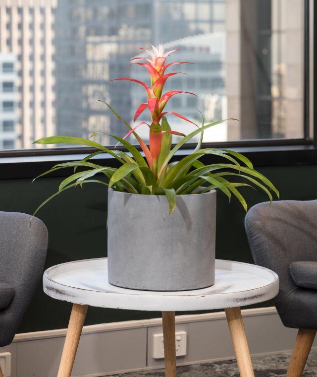 Speciality Plants