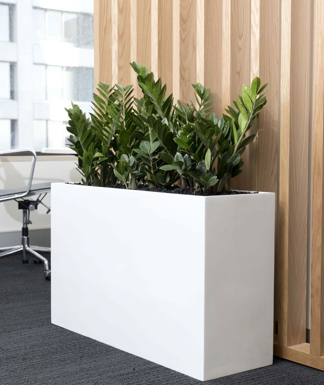 Indoor Plant Hire Amp Office Plants Sydney Melbourne