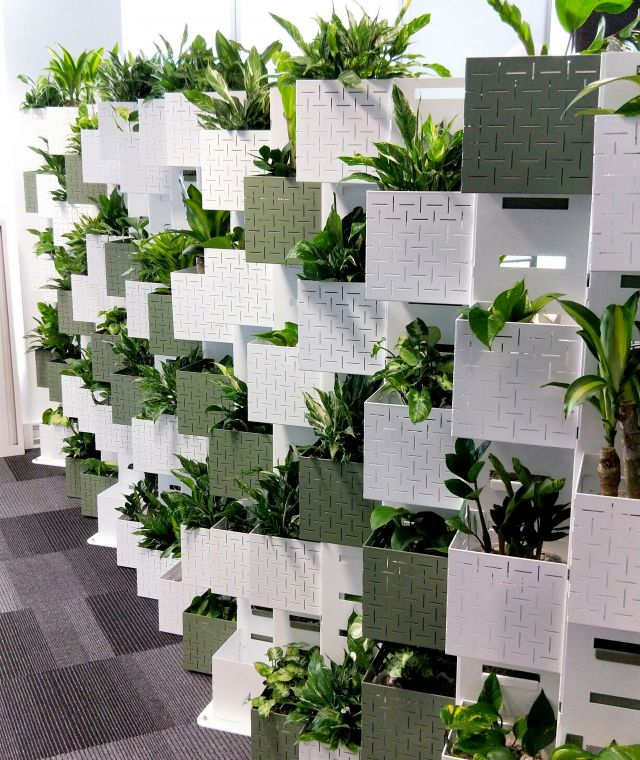 Green Wall Projects