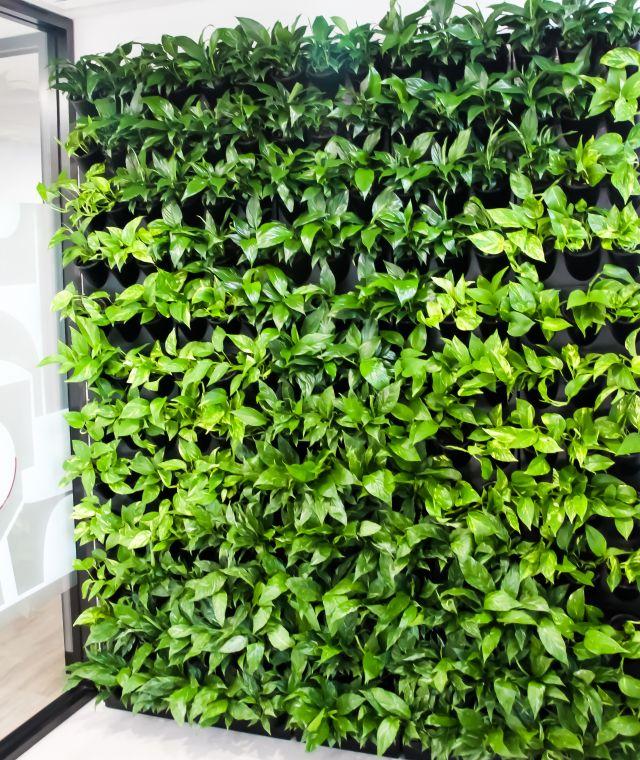 Modular Green Walls