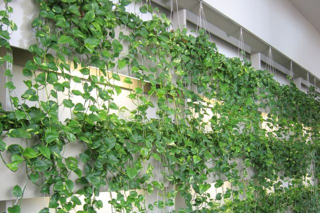 Choosing the right Green Wall for your office space