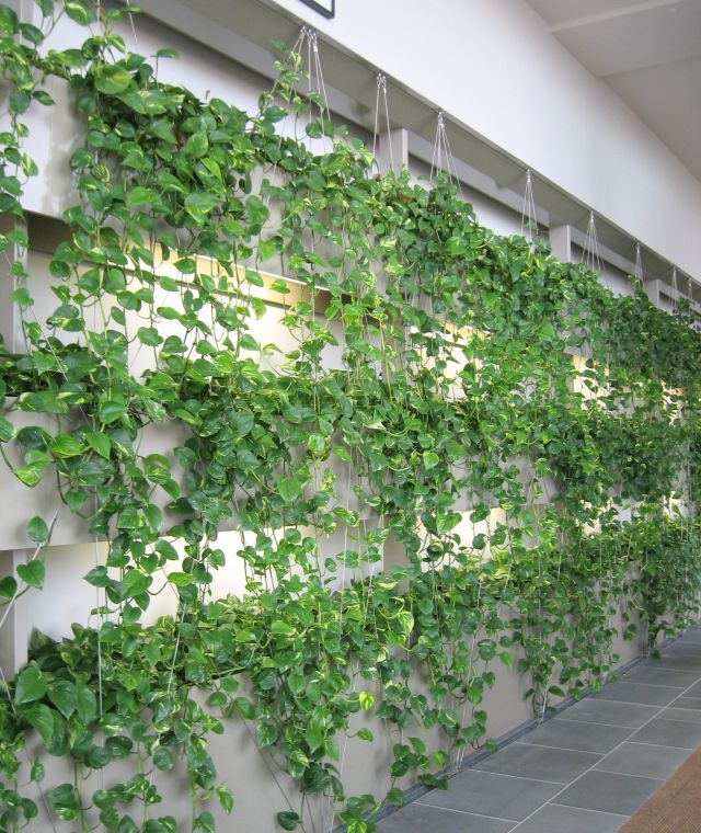 Custom Joinery Green Wall