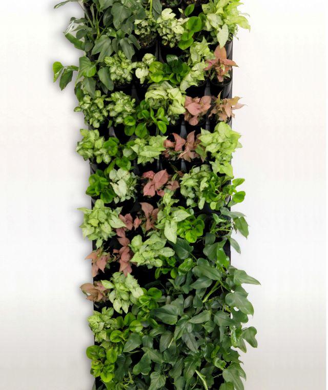 MODULAR GREEN WALL SYSTEM