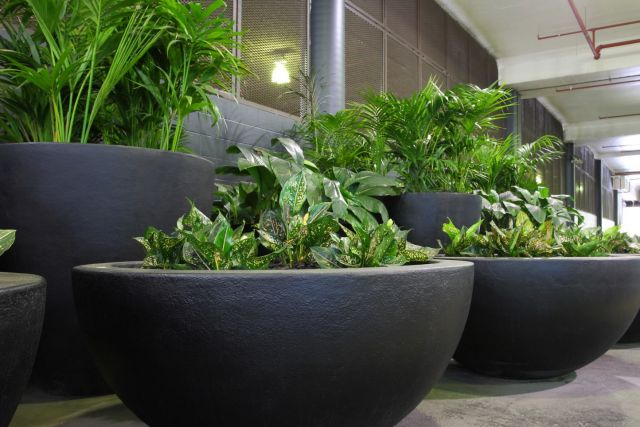 The advantages of indoor plant hire