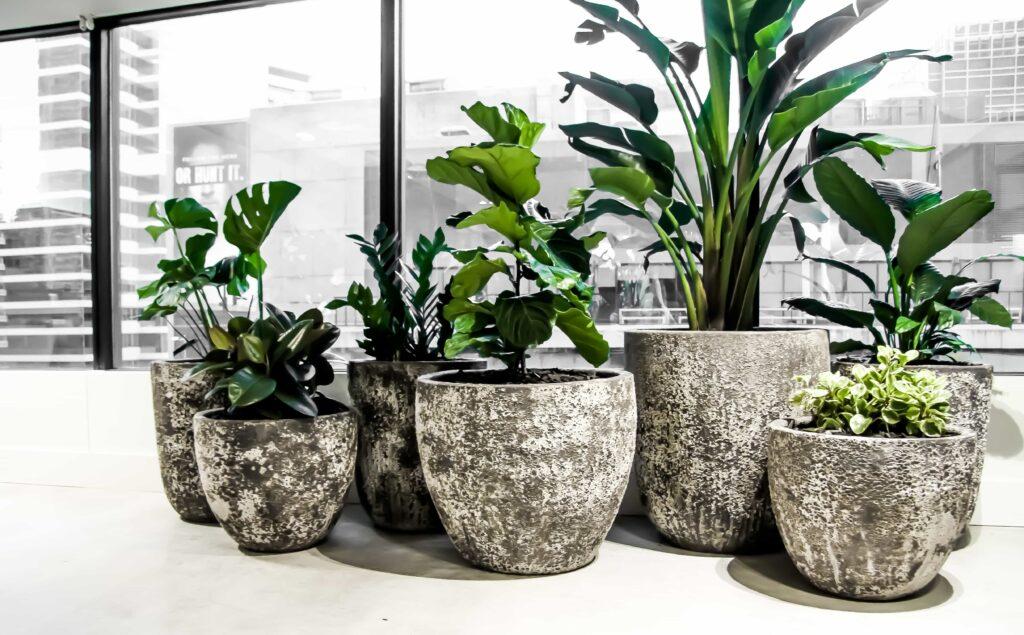 Concrete Pot Plants