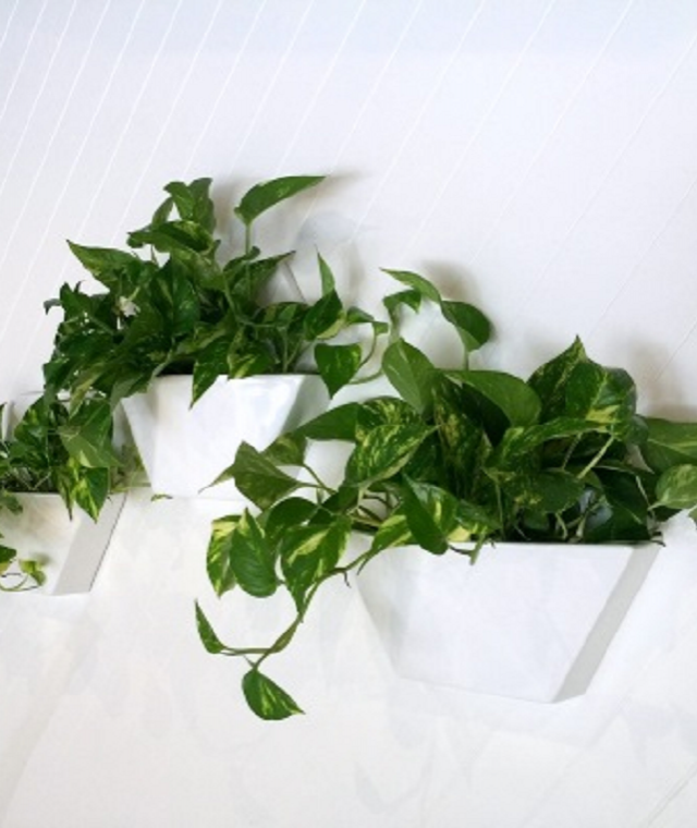 Wall & Hanging Planters
