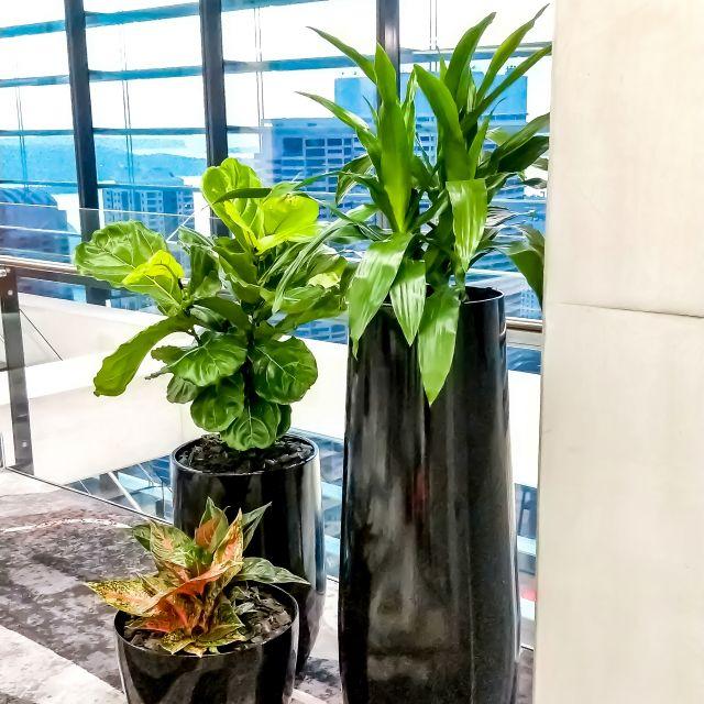 Floor Plant Brochure