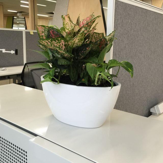 Desktop Plant Brochure