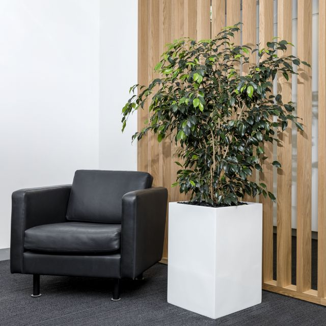 Desktop & Floor Planter Range