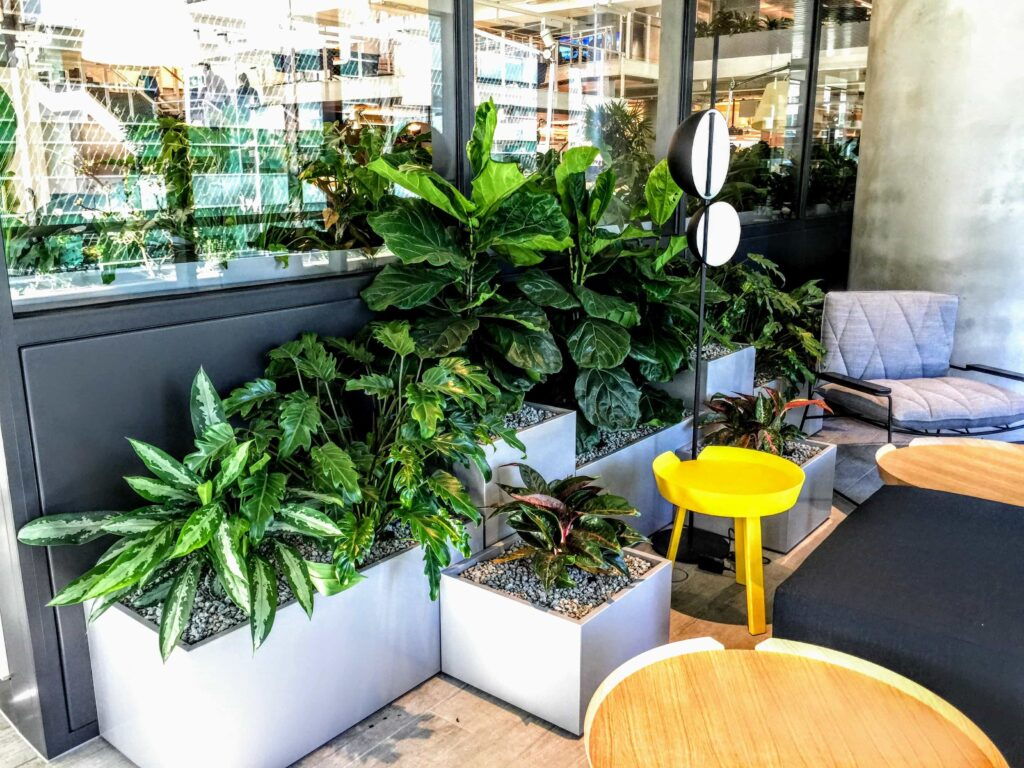 beautifully arranged indoor office plants melbourne