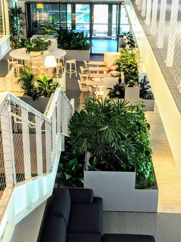 indoor plants australia