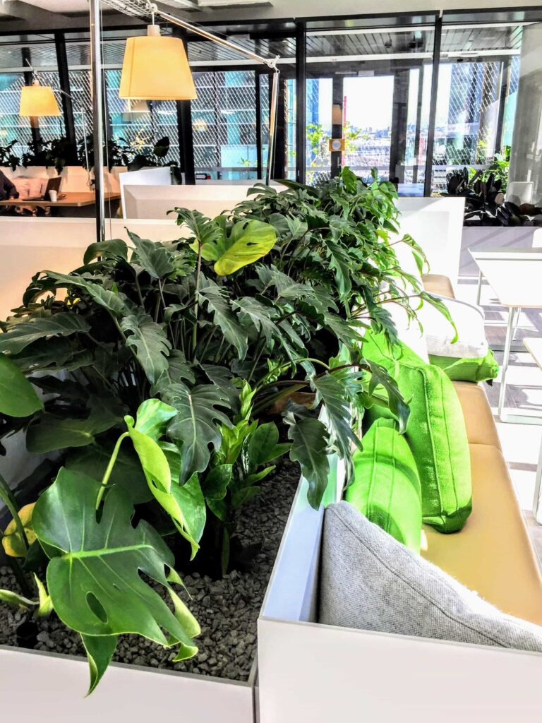 potted indoor plants sydney