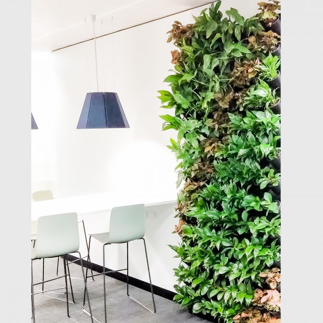 Wall / Hanging & Green Wall Range
