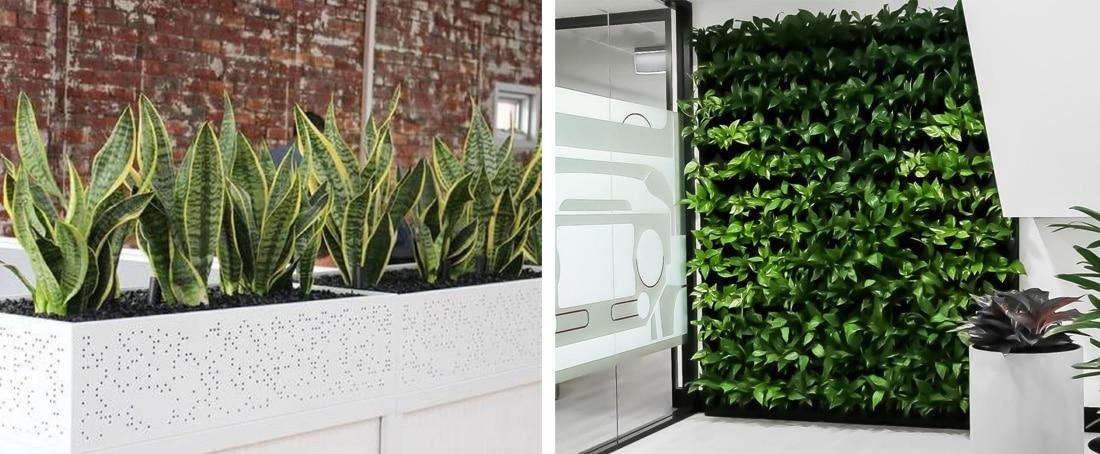 Indoor Plant Hire Brisbane - Frenchams