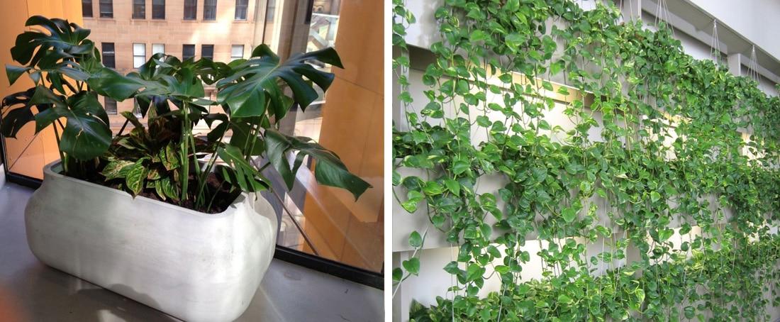 Indoor Plant Decor - Frenchams